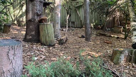 One of the squirrels feeds in its enclosure PICTURE: Matthew Farmer