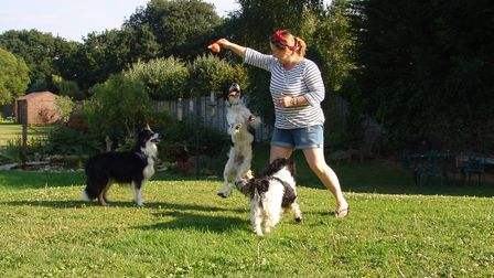 Glaven Dogs, a dog behavioural business is offering online sessions to help your canine friend if th