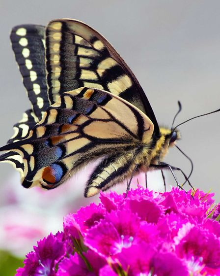 A butterfly at rest makes a stunning shot at Waveney Camera Club.