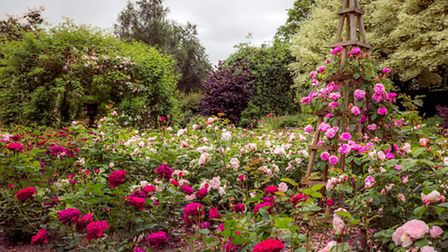The rose garden at Ditchingham Hall is always popular with visitors.