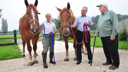 Jayne and John Groom have introduced two Suffolk punch Horses into the area for the first time in 75