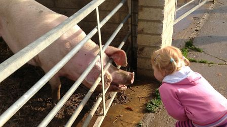 Children from Stepping Stones Nursery School in Woodton visiting the farm in Stow Bardolph.