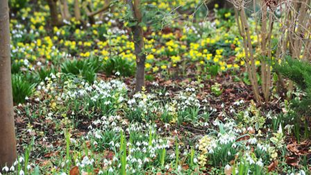 Members of the public enjoy Snow drop day in the gardens of John and Brenda Foster in Redisham.