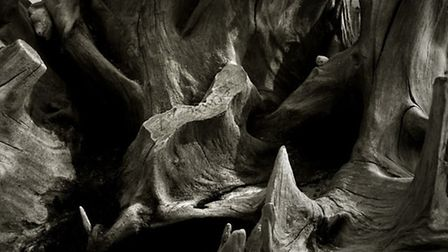 Covehithe treescape in Suffolk by photographer Jeremy Webb