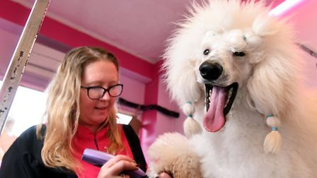 Dog groomer Tiffany Jennings pictured with Bentley.Picture: James Bass