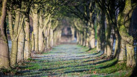 The tree lined avenue to a Beccles farm on the Ringsfield Road, taken by Roland Blunk.