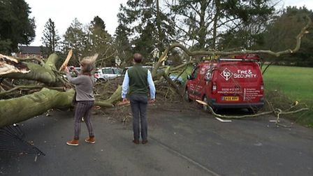 Tree which fell onto a van in Earsham as a result of Storm Dorris