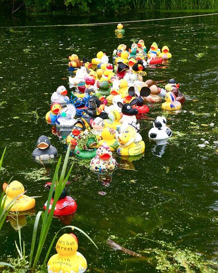 The third annual Great Bungay Duck Race. Picture: Edwin Rosier Photography.