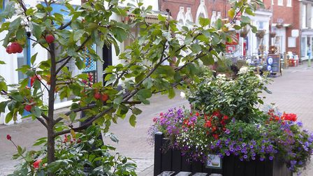 The annual Halesworth in Bloom Awards will take place on Tuesday November 14 at The Cut Arts Centre