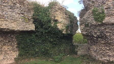The ivy and vegetation on Bungay Castle before the work was carried out. Picture: Olly Barnes.