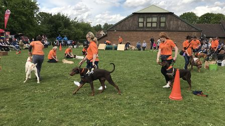 A dog show held in Loddon last year. Picture: Amy Smith.