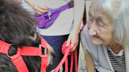 Gwen Moore at Brooke House care home with the miniature donkey. Picture: Courtesy of Brooke House