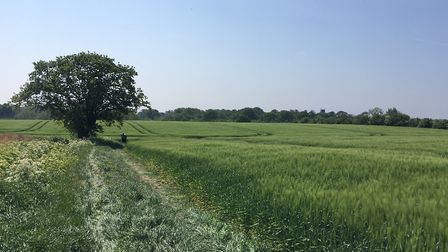 The Ditchingham Estate grounds are seldom seen by members of the public. Picture: Thomas Chapman