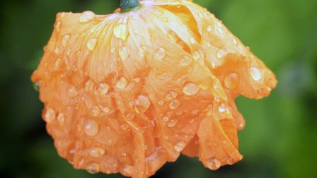After the Rain by Sue Grief.