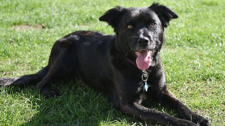 Rogue the dog who went missing for 5 days.Picture: ANTONY KELLY