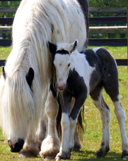 Shortly after her rescue, Zowie gave birth to little Stardust. Picture: Redwings Horse Sanctuary