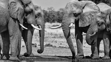 Jane Murphy's images At the Water Hole. Picture: Jane Murphy