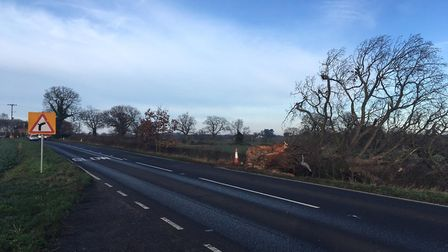The B1332 Norwich Road at Hedenham, where Harold Mason died after a collision with a tree. Picture:
