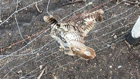 Villagers have slammed newly installed wire fencing which replaced hedgerows after a young owl got c