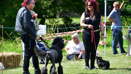 Bungay Dog Show on Falcon Meadow in Ditchingham. Picture: Andrew Atterwill