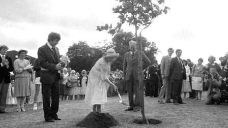 The Queen Mother plants the London Plane tree at Harleston recreation ground.