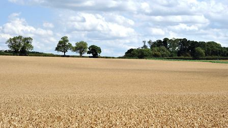 Farmers' leaders have welcomed plans for simpler planning rules