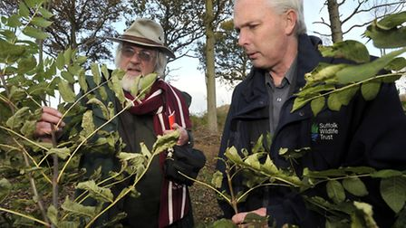 Oliver Rackham, left and Suffolk Wildlife Trust Chief Executive, Julian Roughton inspect the trees f