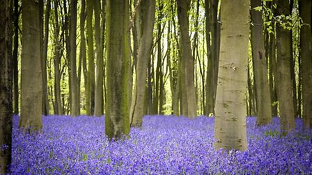 PROTECTED: New body will protect the region's woodlands