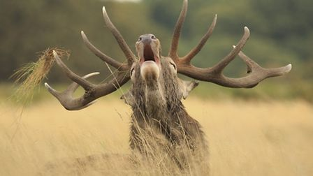 © Kyle Moore PhotographyRed Deer Stag