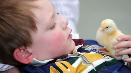 Newly hatched chicks at Stowmarket and Area Opportunity Group and Stepping Stones Nursery. Edward Al