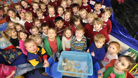 Nursery and year one pupils at Sir Robert Hitcham School, Framlingham, with the chicks that have re