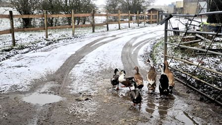 A snowy spell in Essex in March - Lucy Taylor