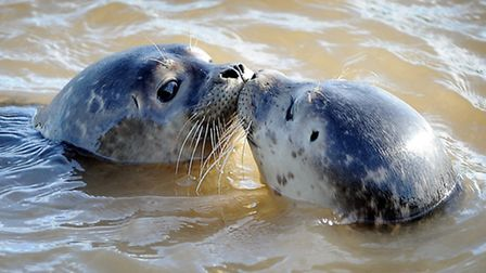 Don't touch seals, warns RSPCA