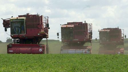 The pea harvest in progress; the new deal agreeed this week is a boost for local farmers