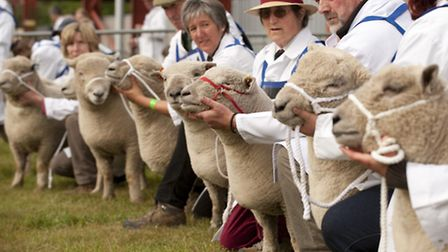 The Southdown Sheep Society is holding its annual breed show at the Suffolk Show this year