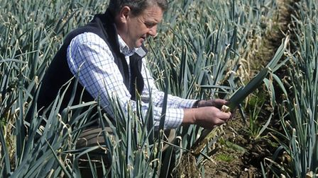 Andrew Williams, manager of Home Farm, Nacton looking at the leeks that will be hand picked.