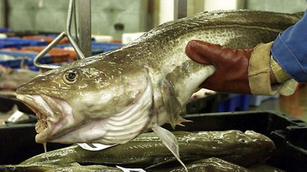 New fisheries deal will be good for regions, says MEP