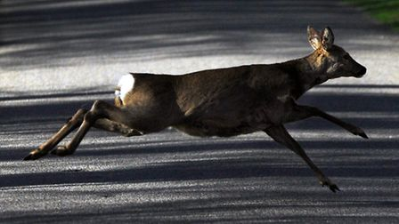 Deer can appear almost instantly into the path of your car so be alert.