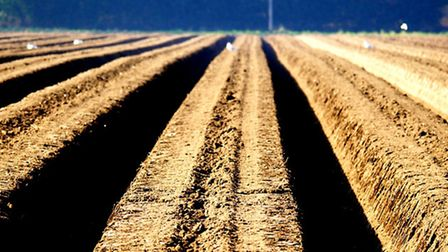 Tractor making ridges for potatoes to be planted