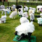 More than 45 primary schools from throughout the county submitted lifesize model sheep entries (pict