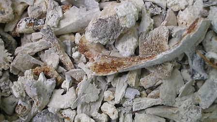 The analysis of the bones from Mersea Island Barrow. These were taken last year during the centenary