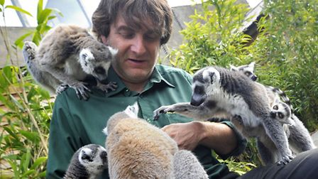 Zoological director Anthony Tropeano with some of the lemurs at Colchester Zoo.