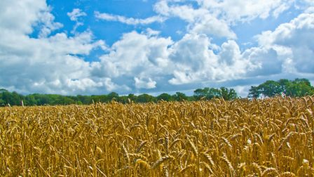 Poll reveals farmers' fears over winter wheat crop