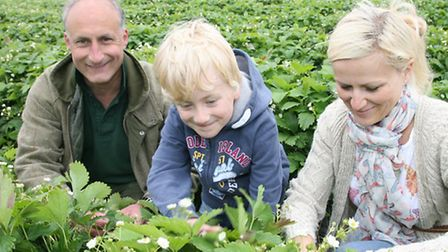 Tiptree farm manager Chris Newenham out in the strawberry fields with Preston and Danielle Bailey