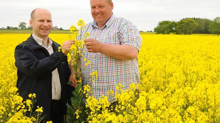 Ron Stobart, left, head of agronomy for NIAB TAG, and David Jones, Morley Farms farm manager, checki
