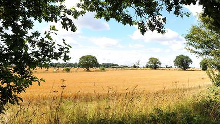 Farmland prices in the East of England have hit another new record, says RICS