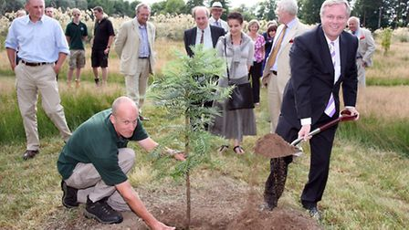 Australian High Commissioner Mike Rann (right ) planting a Wollemi pine in Gondwanaland assisted by