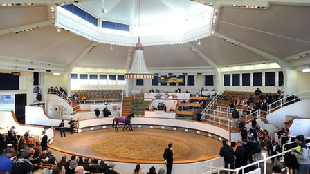 The horses-in-training sale at Tattersalls in Newmarket.