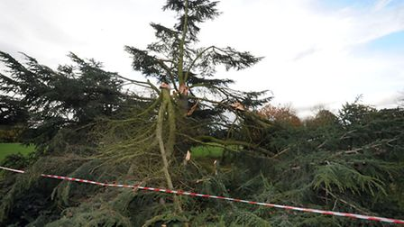 The aftermath of the storm in Bury St Edmunds. A fallen tree in Hardwick Heath.