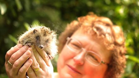 Ros Rumbold who runs the Ipswich Hedgehog Rescue.